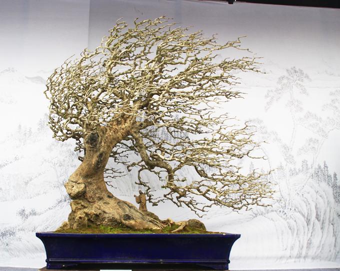 Windswept Bonsai Tree