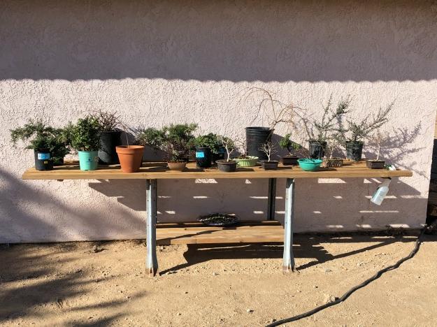 Bonsai Bench Display