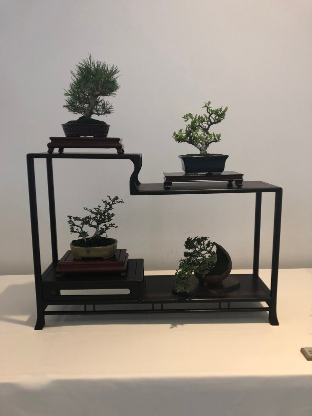 Shohin Bonsai Display